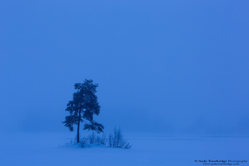 Scots Pine (Pinus sylvestris) growing on small island in frozen lake.