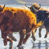 Highland races