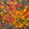 Fall Foliage, New York