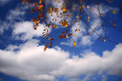 Fall Colors---Media, PA