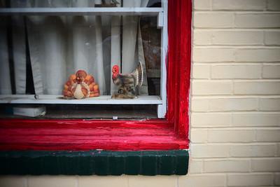 Turkeys---Spring City, PA