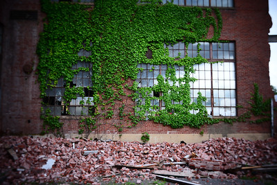 Windows & Ivy---Abandoned Factory---Scranton, PA