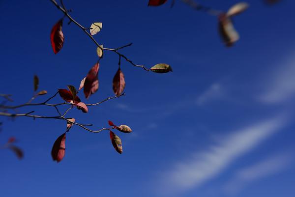 Leaves---Newburg, PA