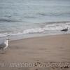 Misquamicut Seagulls