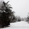 Walk in Snowy Woods