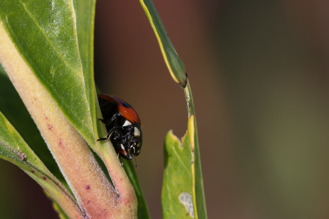 """Ladybird"""