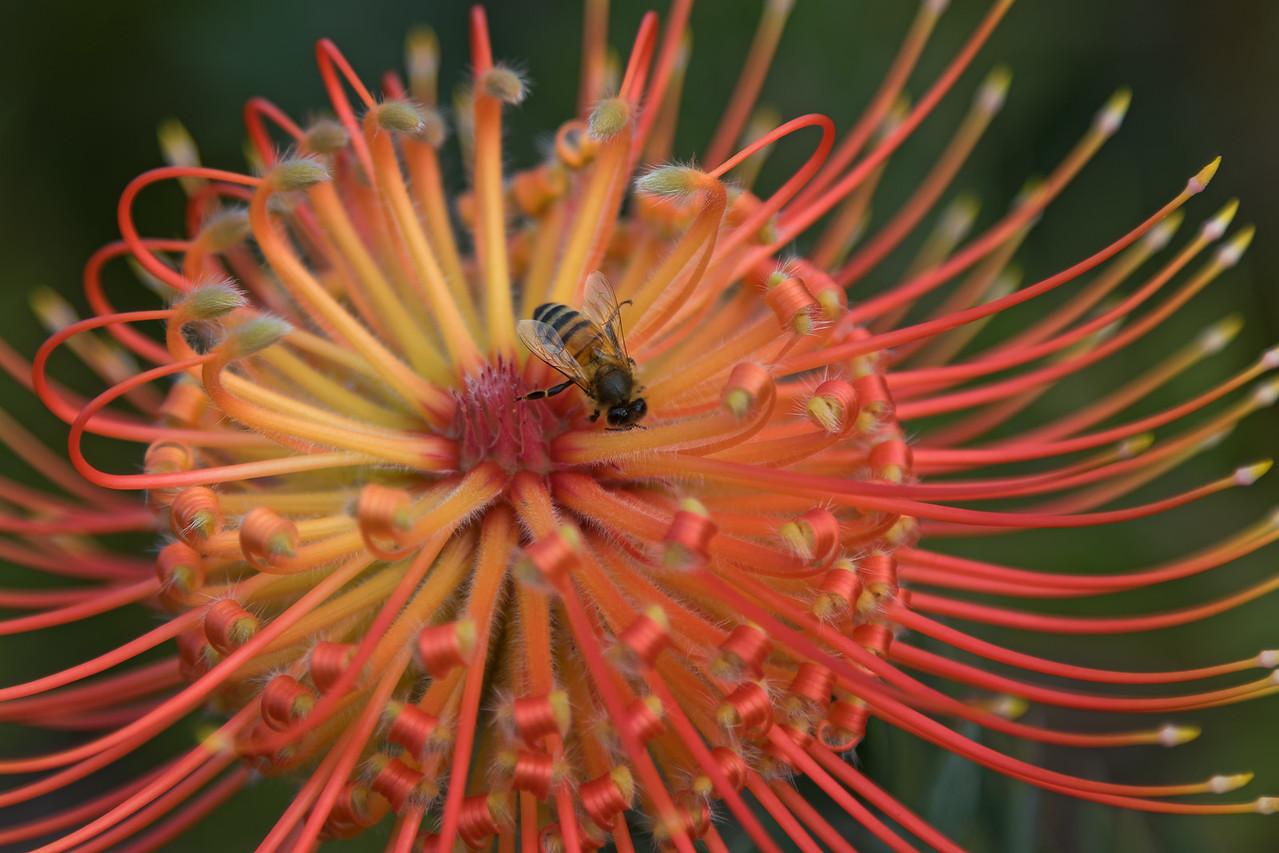 """""""Pollination"""""""