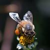 """Greedy Bee"""