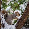 Chilled Out Squirrel