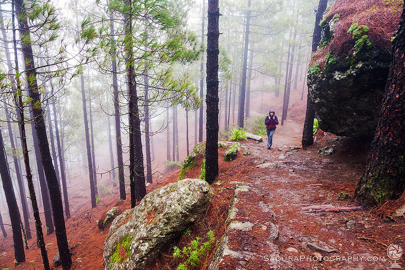 Trail to Roque Nublo
