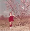 peach blooms on R A  Stallings farm - Elizabeth Knight1