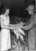 """Ruby Ingram and Julian Rowan, July 1947<br /> <br /> The Atlanta Constitution, Sunday, July 13, 1947<br /> SOON WILL TURN TO GOLD - Millions of pounds of tobacco in South Georgia have been cured and are now packed away in storage to get in """"order"""" (proper moisture content).  Sales begin on 17 Georgia markets July 24 with a bumper crop expected to exceed last year's 150,000,000 pounds which brought more than $52,000,000.  Julian Rowan, recently chosen master farmer of Berrien County, shows some choice leaf to Ruby Ingram, home demonstration agent of Berrien County."""