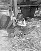 JC_LFN_000301_Cane Grinding_Jerry Griner_12-1949