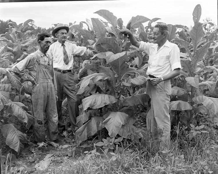 JC_LFN_000289_Tobacco Fields_6-10-1949-2