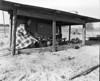 JC_LFN_000366_4H Chick Range_Roma Gene Parrish_4-1-1948
