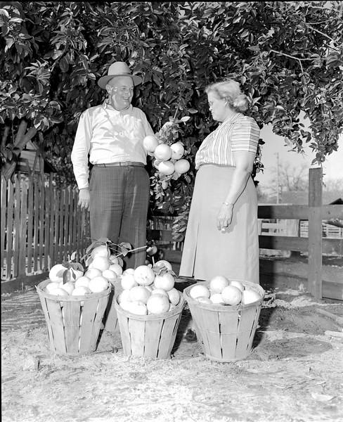 JC_LFN_000181_Mark Watson_Grapefruit_11-7-1948