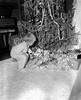 JC_LFN)000389_John David Luke Christmas 1948