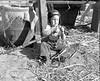 JC_LFN_000300_Cane Grinding_Jerry Griner_12-1949