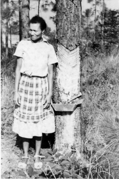 Unidentified housewife of turpentine worker, standing next to a pine which has a cat face cut into it with tin cup attached.