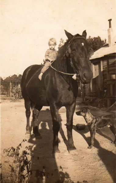William Charles Richardson, son of Andrew Chesley and Lilla Mae (Hodges) Richardson mounted on horse in New River Community, Summer 1943. (Courtesy of Charles Richardson)