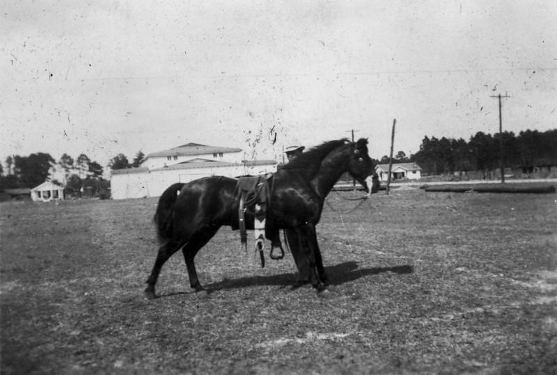 Horse Show on Nashville High School (late Nashville Elementary). (Photographs courtesy of Arch Clark)