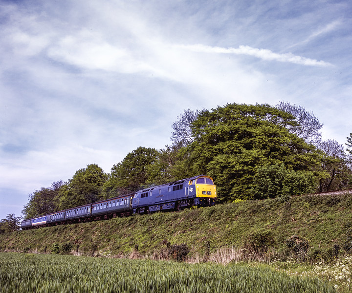 """D1013 """"Western Ranger"""" at Stable Lane with the 16:55 Alton - Alresford, on 15th May 2005. Scanned Transparency."""