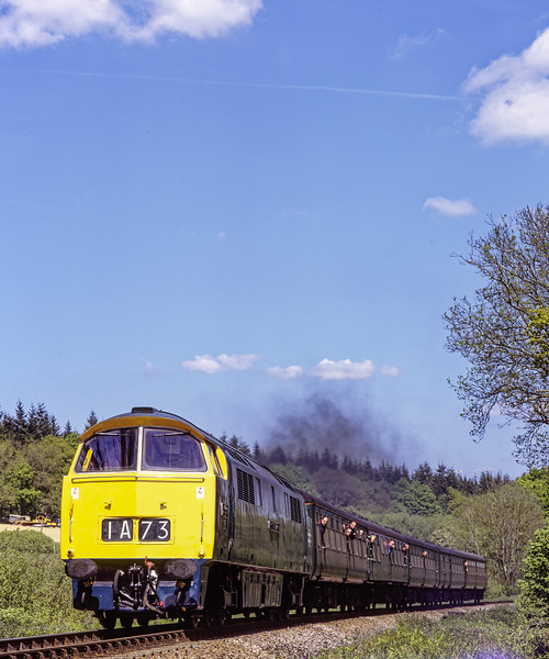 """D1013 """"Western Ranger"""" at Brickiln Lane with the 13:25 Alton - Alresford, on 15th May 2005. Scanned Transparency."""