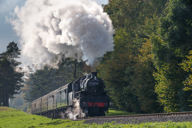 Ivatt class 4 No. 43106 exits the pine trees with the 14:10 Alresford - Alton, <br /> on 22nd October 2016.