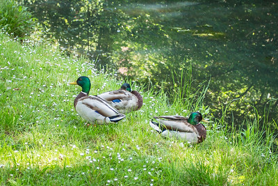 Early Summer 2019 on the Risca Canal