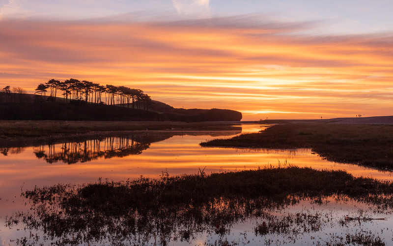 With the sun now peaking over the horizon on a calm morning in Budleigh Salterton at the river Otter Estuary, looking out over the nature reserve at the copse of Scots Pine Trees being reflected into the river otter