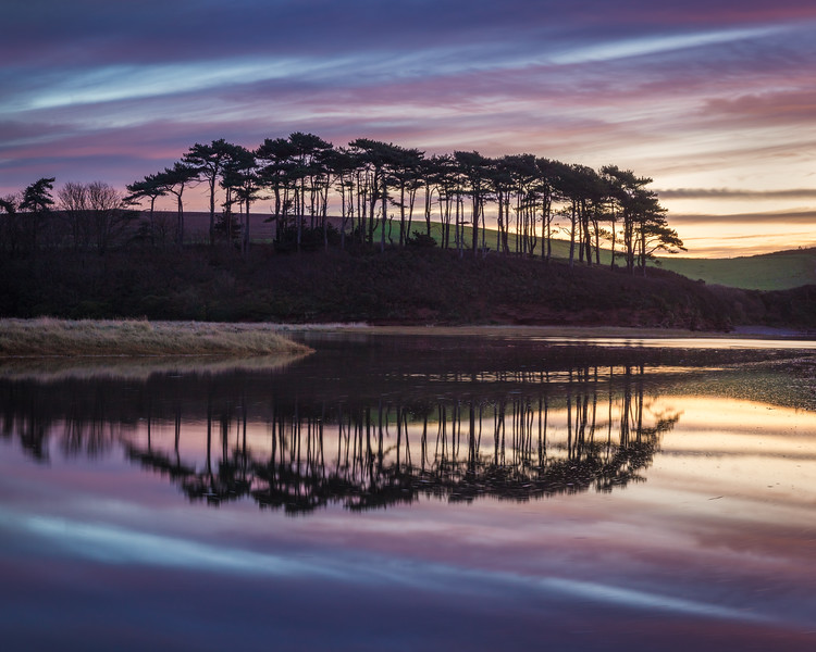 Budleigh Salterton Scots Pine Reflection