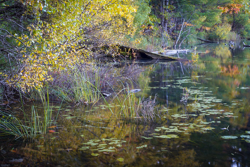 WI 184<br /> <br /> Autumn colors along the shoreline of a secluded northwoods lake in northern Wisconsin.