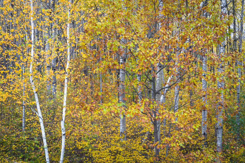 WI 205<br /> <br /> Autumn colors in the Norther Highland-American Legion State Forest in Oneida County, Wisconsin.