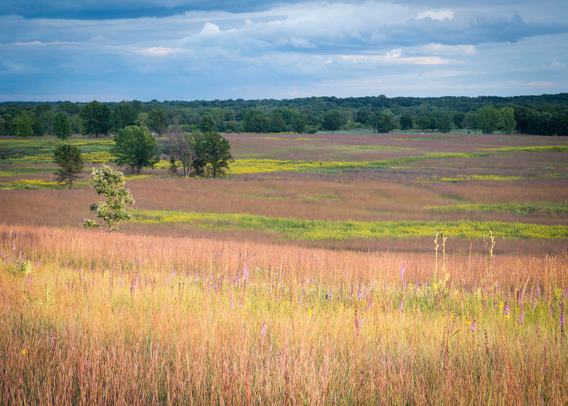 SFP 023<br /> <br /> The autumn prairie glows in the warm light of a setting sun.  Shoe Factory Road Prairie Nature Preserve, Cook County, Illinois, USA.