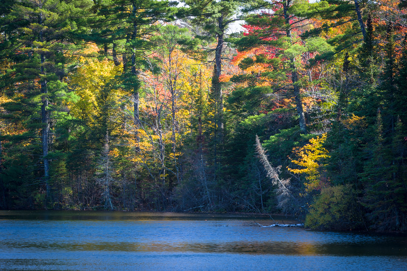WI 193<br /> <br /> Afternoon light on the fall colors at Nebish Lake in northern Wisconsin.