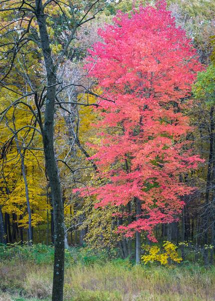 Autumn Blush