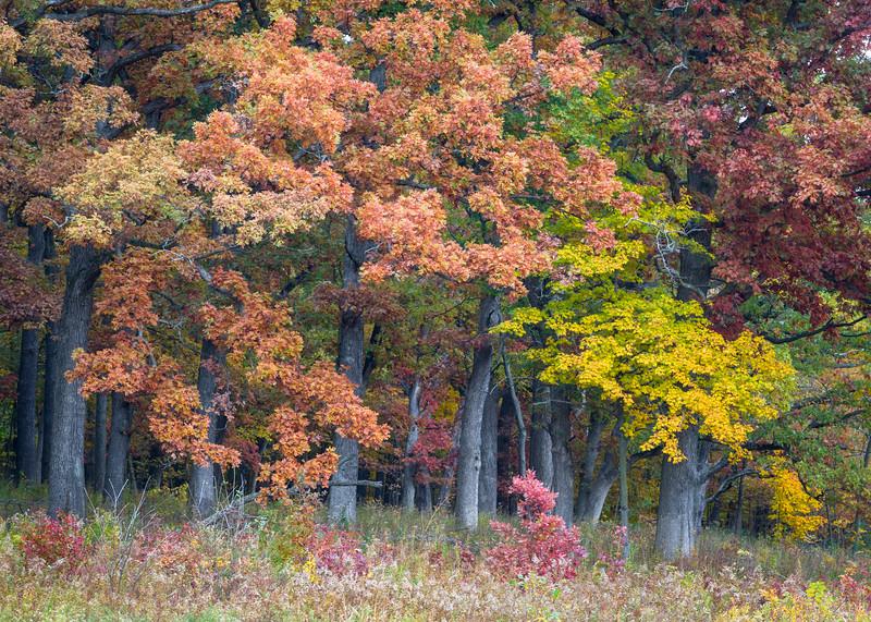 October Shades II