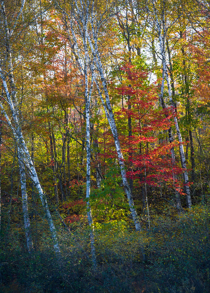 WI 174<br /> <br /> Fall color in the northwoods of northern Wisconsin.