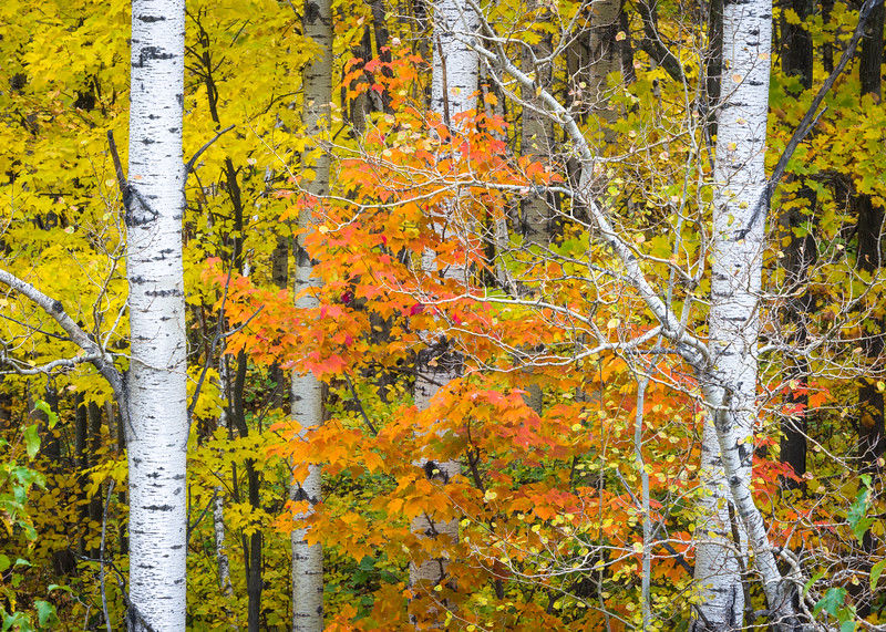 WI 202<br /> <br /> Autumn colors in the Norther Highland-American Legion State Forest in Oneida County, Wisconsin.