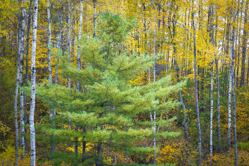 WI 209<br /> <br /> Autumn colors in the Norther Highland-American Legion State Forest in Oneida County, Wisconsin.