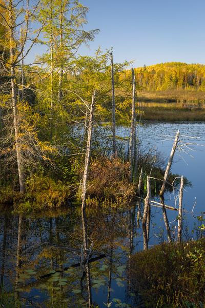 WI 176<br /> <br /> Morning light on a bog along Little Bearskin Trail in Oneida County, Wisconsin.
