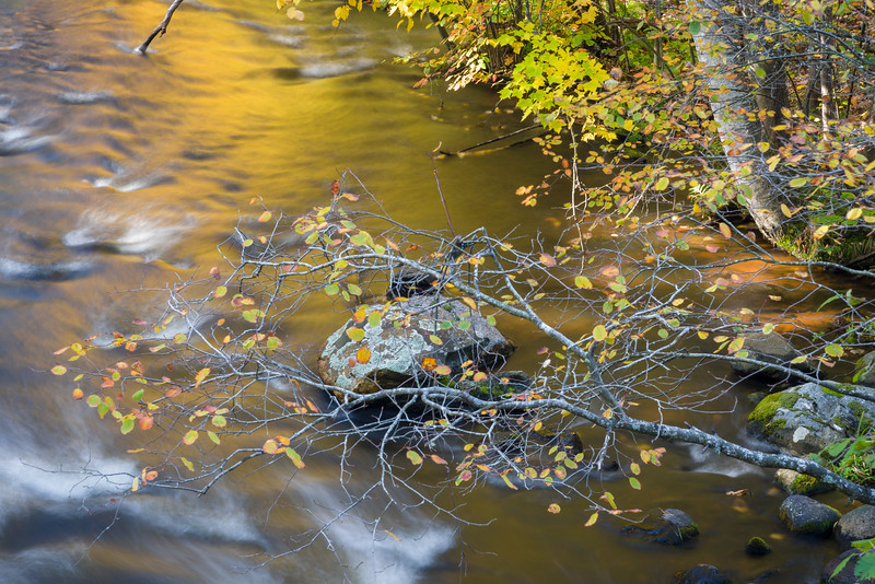 WI 190<br /> <br /> An intimate autumn scene along the Manitowish River in northern Wisconsin.