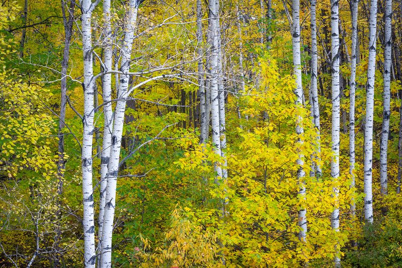 WI 203<br /> <br /> Autumn colors in the Norther Highland-American Legion State Forest in Oneida County, Wisconsin.