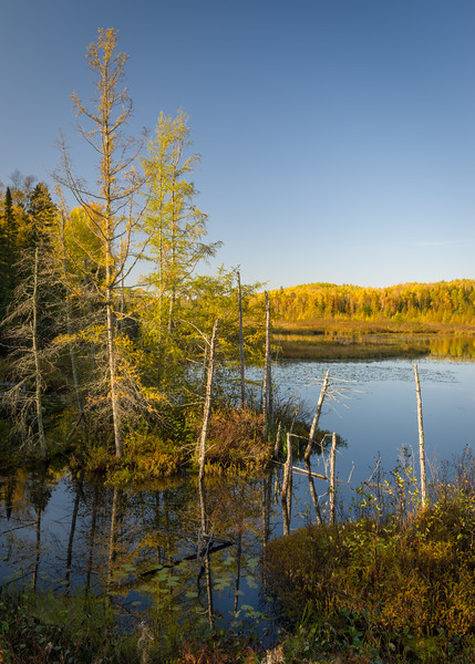 WI 175<br /> <br /> Morning light on a bog along Little Bearskin Trail in Oneida County, Wisconsin.