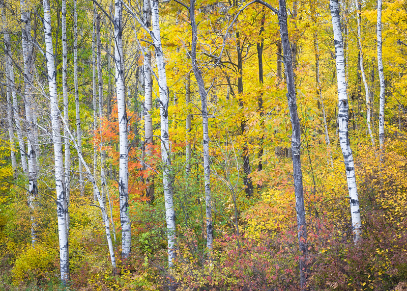 WI 208<br /> <br /> Autumn colors in the Norther Highland-American Legion State Forest in Oneida County, Wisconsin.