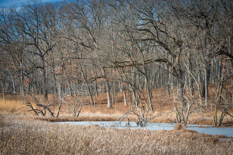 December Marsh