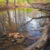 WFG 071<br /> <br /> Autumn colors reflected in the calm surface of Sawmill Creek.