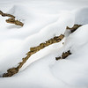 WFG 076<br /> <br /> Deep snow transforms a fallen log into a winter sculpture on the banks of frozen Sawmill Creek.