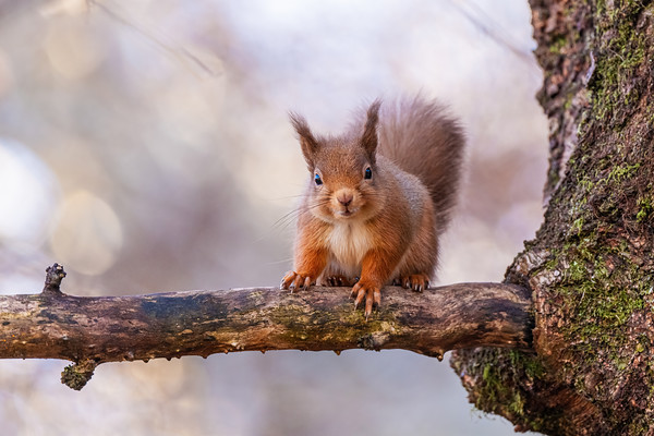 The sweetest red squirrel ever??