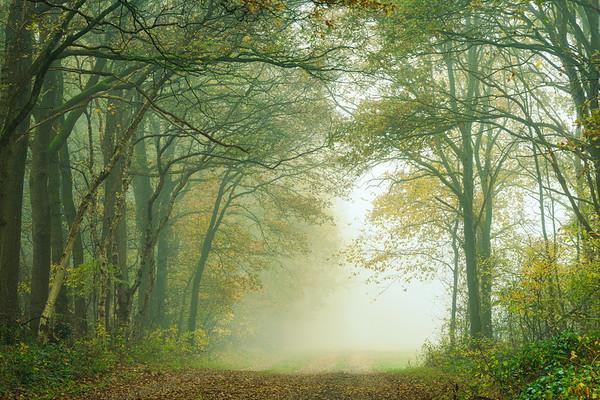 Autumn Serenity PB9161.2020